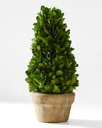 Boxwood Topiary Collection